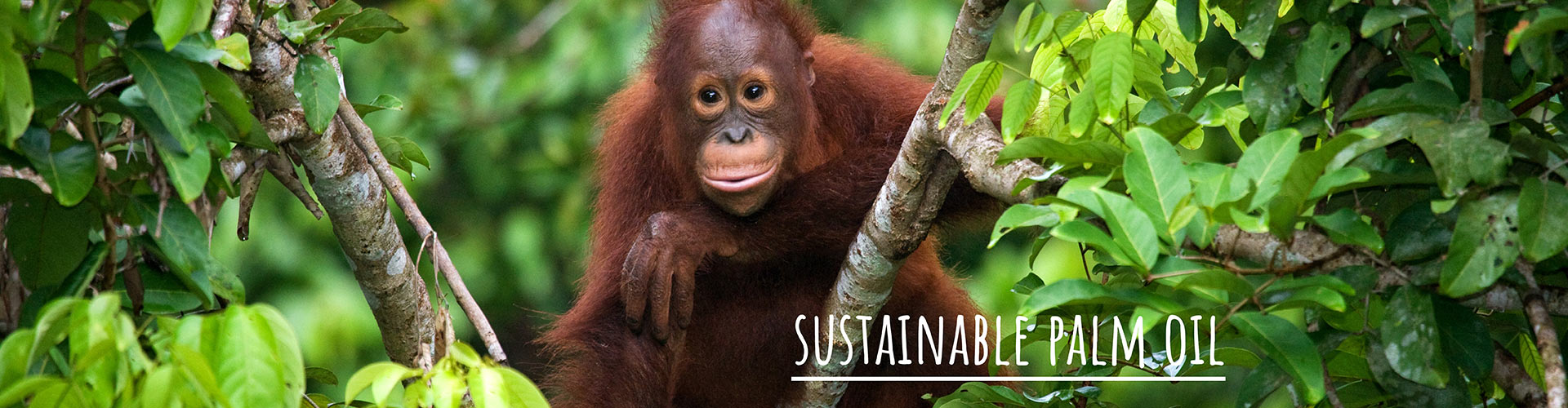 Toronto Zoo Palm Oil Statement