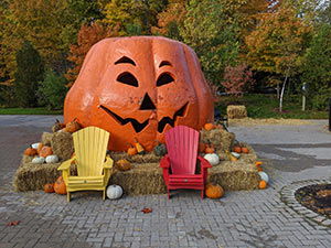 The great pumpkin in the Toronto Zoo