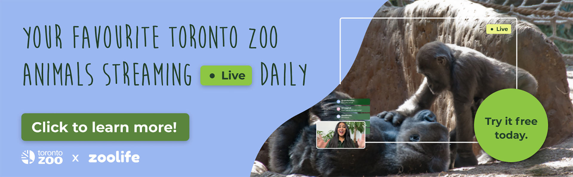 Your favourite Toronto Zoo animals streaming live daily