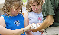 Kids petting a ferret