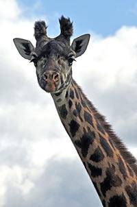 Toronto Zoo Admission