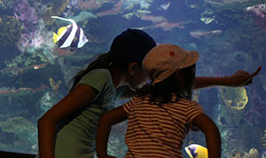 Girls pointing at aquarium