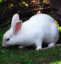 White rabbit at the Zoo