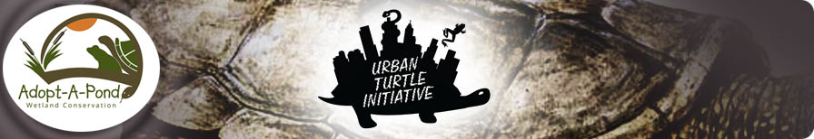 Urban Turtle Initiative